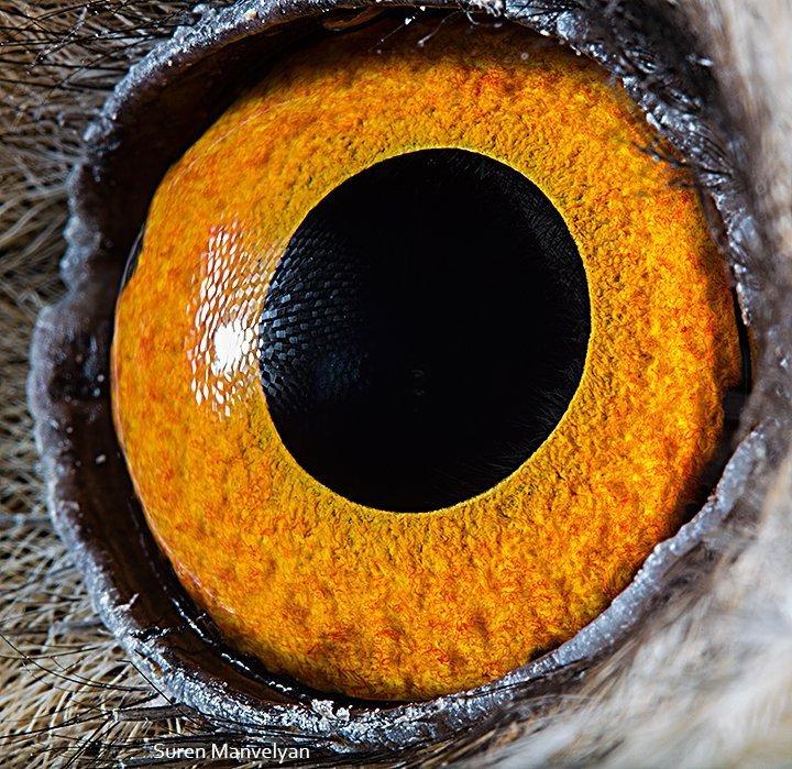 1owl_eye_0