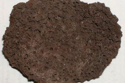 Мозг человека - 6000 лет