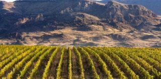 Как возрождаются традиции виноделия Армении